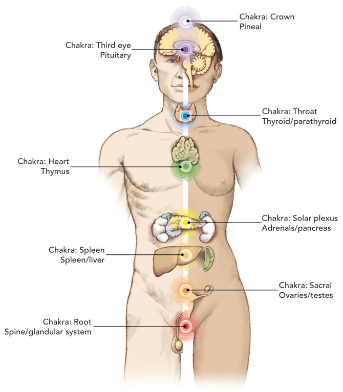 Hd Wallpapers Where Are Your Kidneys Located In Your Body Diagram