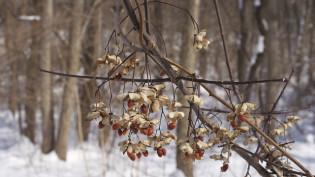 winter a season of stillness