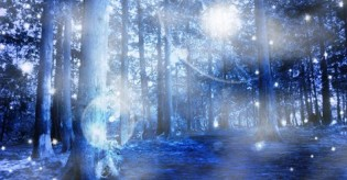 new moon forest
